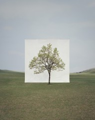 photo,myoung,ho,lee,arbre,nature