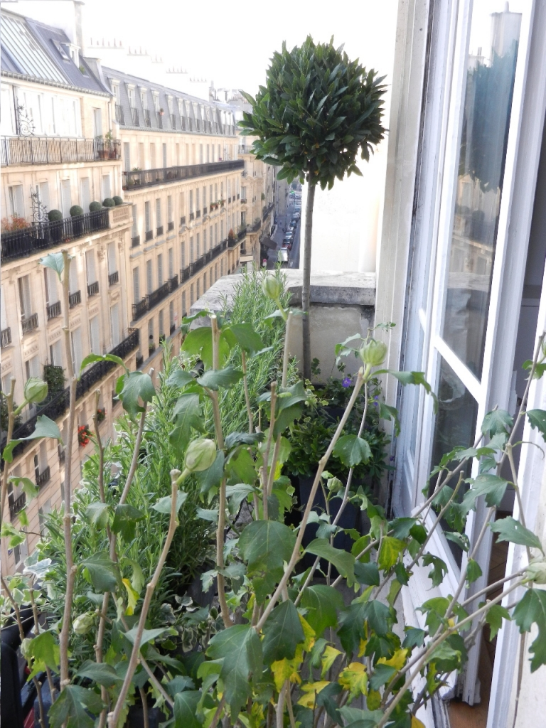 Paysagiste paris balcon id e inspirante - Amenagement balcon paris ...
