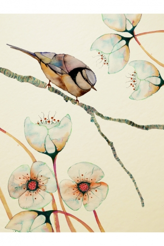 Colleen_Parker, oiseaux, illustration