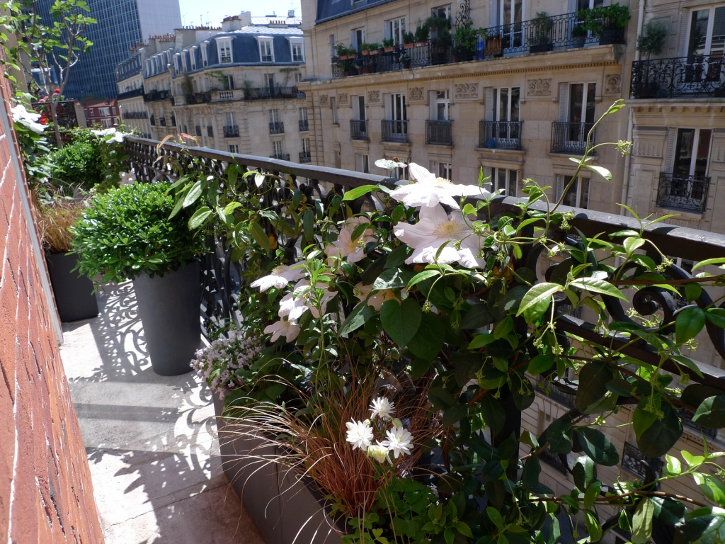 Am nagement paysager d 39 un balcon filant paris l - Amenagement petit balcon parisien ...