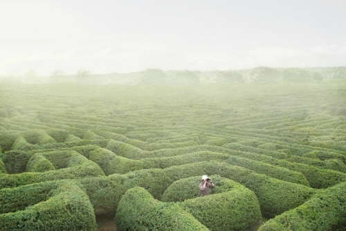labyrinthe, jardin, peter_andrew,photo