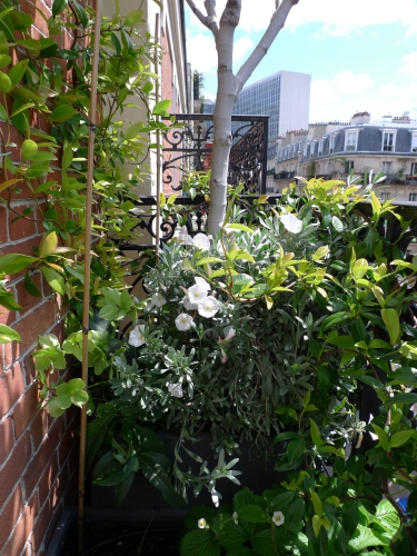 L 39 aurey des jardins - Amenagement balcon paris ...